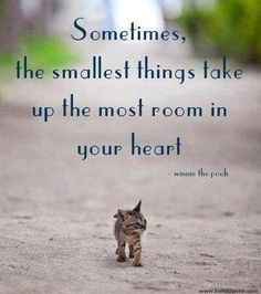 Sometimes the smallest things take up the most room in your heart Winnie The P - Funny Cat Quotes Funny Cats, Funny Animals, Cute Animals, Animal Fun, Baby Animals, Cute Kittens, Cats And Kittens, Ragdoll Kittens, Bengal Cats