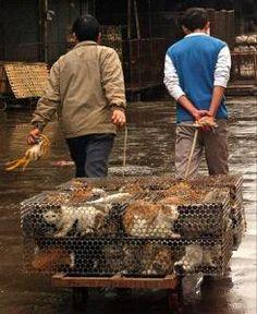 PETA did an investigation and found that cats, dogs, and puppies are routinely used to make fur products. Here are some disturbing facts: PETA got actual footage of cats and dogs hung up by their legs and tails and had the fur peeled from their flesh while they were alive! Once they were stripped, their bleeding bodies are tossed into a pile with other bodies, where the animals' hearts were still beating and they were still gasping for life for up to five minutes!  OMG I may be OVER FASHION!