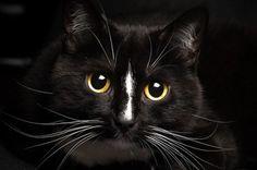 Cat Whiskers, posted via petside.com