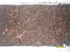 starting your very own worm farm-the easy way