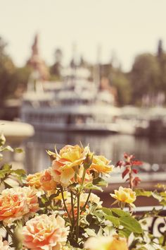 Flowers and Disneyland
