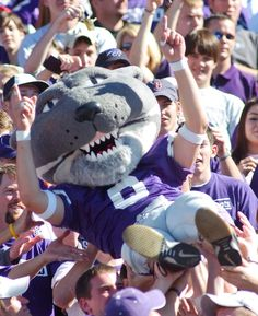 Willie the Wildcat in the stands at a K-State football game. Copyright K-State Photo Services.