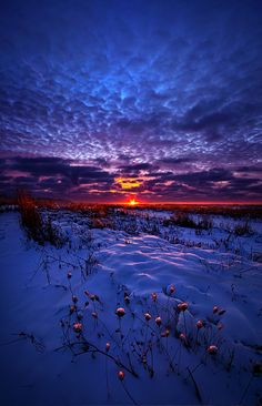 ~~All The Dreams I Used To Know | epic blue sunrise over a snowy farm field, Caledonia, Wisconsin | by Phil Koch~~
