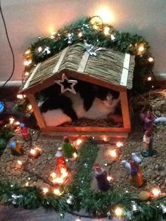 We all know the true Christmas story of the birth of Jesus but we didn't know there was a cat taking up all the room in the stable!!