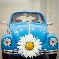 Volkswagen, Vw Bus, Daisy Love, Blue Daisy, Beetle Bug, Vw Beetles, Cool Pictures For Wallpaper, Splash Images, Miniature Photography