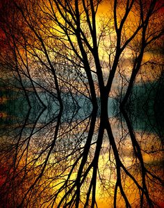 ✮ Colorful sunset behind the silhouette of tree branches in a mirror image - Longmont, Colorado