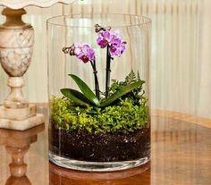 Low Light Orchids for terrarium Orchid Terrarium, Garden Terrarium, Succulent Terrarium, Terrarium Ideas, Moth Orchid, Orchid Plants, Orchid Care, Miniature Orchids, White Flower Farm