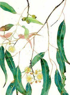 Australian Gum Tree Google Search Botanical Painting