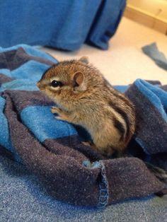 This teeny tiny chipmunk.