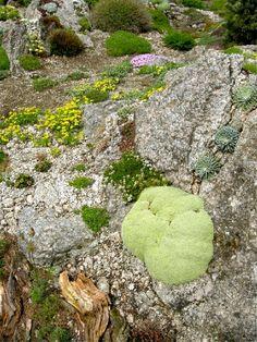 22 April 2014 - Kent Alpine Gardener's Diary - Gardeners' Diaries - Alpine Garden Society