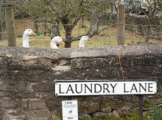 line up, line up at Laundry Lane