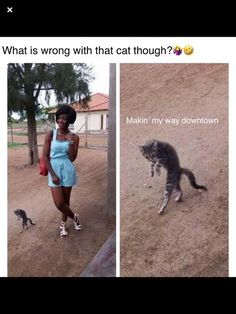 20 Funny Kitty Cat Memes Too Cute To Miss Are you a cat lover? Then these funny kitty memes are just perfect for you! If you're missing your cat, then perhaps these memes will cheer you up. Really Funny Memes, Crazy Funny Memes, Stupid Memes, Funny Relatable Memes, Haha Funny, Hilarious Memes, Funny Stuff, Funny Blogs, Funny Hood Memes