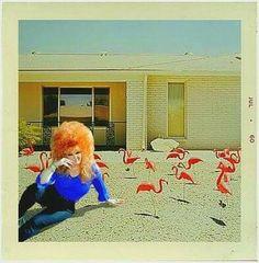 Vintage Photographs, Vintage Photos, Vintage Magazine, Pulp, Vintage Party, Illustrations, Pink Eyes, Pink Flamingos, Big Hair