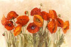 Vibrant Poppies by Carol Rowan