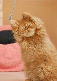 Stretchhhhh