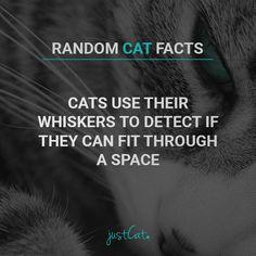 #cats #randomcatfacts