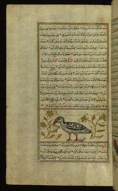 An eagle Wonders of Creation  by Qazwīnī 1293 was translated to Turkish in 1717  completed by Rūzmah-ʾi Nāthānī - W659