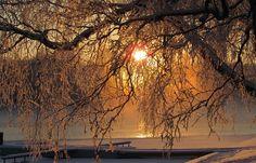 Talvinen pakkaspäivä. Finland, Winter Wonderland, Celestial, Sunset, Outdoor, Sunsets, Outdoors, Outdoor Living, Garden