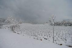 Vista invernal desde Masía Can Pascol Turismo Rural, viñas nevadas.
