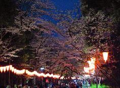 186:「夜桜を楽しむすごい人々 外国人観光客が増えましたね 成田空港から一本で来れるのも魅力ですかね」@上野恩賜公園