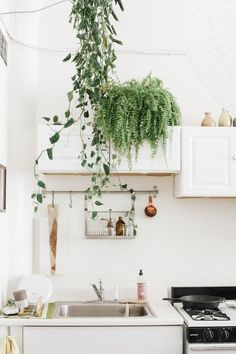 Greenery in the kitchen