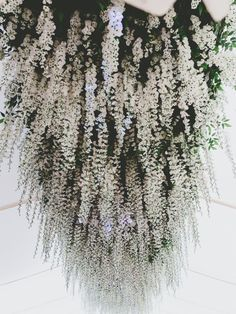 Stunning wisteria creating romantic vibes...so pretty   Follow us: @kwhbridal http://www.karenwillisholmes.com