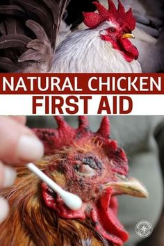 Natural Chicken First Aid - This is a great article about how to care for your chickens naturally.