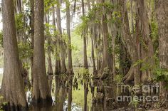 In The Swamp by David Cutts