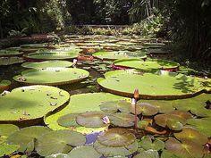 Rio Amazonas - Ache Tudo e Região