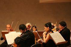 Gruppo violoncelli