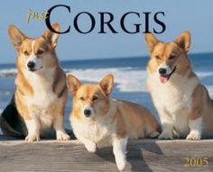 beach corgis