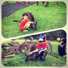 #goldcoast #currumbin #currumbinwildlifesanctuary #australia #burleighheads #currumbinwildlife #koala #cute #currumbinwildlife #queensland #kangaroo #kangaroos #feeding #ゴールドコースト #オーストラリア #カランビン #カランビンワイルドライフ #コアラ #カンガルー #カンガルーの餌やり by 0517sayu http://ift.tt/1X9mXhV