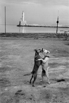 adreciclarte: Chania, Greece, 1981 by Josef Koudelka. Black and white photography Photography Lessons, Photography Workshops, Animal Photography, Fine Art Photography, Street Photography, Vintage Photographs, Vintage Photos, Prague, Classic Photographers