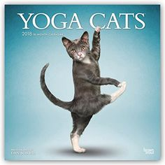 cat decor - Yoga Cats 2018 12 x 12 Inch Monthly Square Wall Calendar, Animals Humor Cat (Multilingual Edition) *** Read more at the image link. (This is an affiliate link) #CatDecor