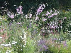 Cilgwyn Lodge - The sublime summer continues Garden Paths, Garden Landscaping, Landscape Design, Garden Design, Garden Inspiration, Interior Inspiration, Garden Ideas, Purple Garden, White Gardens