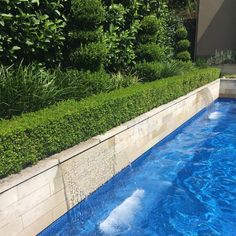 Japanese box hedge around pool Landscaping Around Pool, Landscaping Retaining Walls, Backyard Pool Landscaping, Tropical Landscaping, Backyard Pergola, Landscaping Ideas, Tropical Backyard, Pool Fence, Cheap Pergola