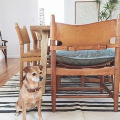 """Amber Lewis on Instagram: """"In my world, you color coordinate your pets with your decor... #pennythehound is really werkin her hue and blending perfect with my new cognac leather dining chairs. #clientmemyselfandicantmakeupmymind #ambularinteriors #decoratordoggie"""""""