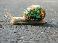 Painted snail shells