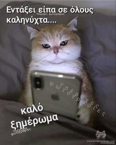 Good Night, Cats, Nighty Night, Gatos, Cat, Kitty, Good Night Wishes, Kitty Cats