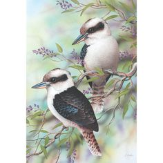 Pretty Birds on Braches Diamond Painting Kit Full Drill. by OurCraftAddictions Australian Animals, Australian Artists, Australian Painting, Pretty Birds, Beautiful Birds, Bird Illustration, Portrait Illustration, Illustrations, Bird Drawings