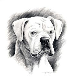 20 Best Drawing Oliver Images Boxer Dogs Boxer Love Drawings