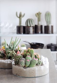 decorate with cacti