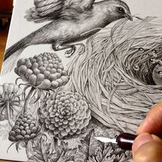 Daily drawing/Work in progress. I return to my works. Today,I draw plants around the nest of the bird Pen and ink on paper.#artsy #art #wip #picture #penfreaks #artfido #artgram #instaart #_tebo_ #rtistic_feature #draw #drawing #illust #illustration #picture #mywork#blackandwhite #bird#sketch #sketchbook #ink#nature#instagood #drawingoftheday#arts_help#sketch_daily#artists_magazine#pendrawing#pen