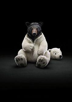 Sneaky Bear!