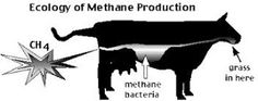 Lost in America: Methane Madness
