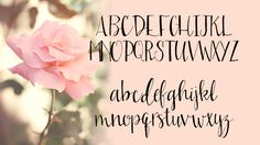 Sarah Jane is a lovely hand drawn script font that gives you the feel of hand drawn calligraphy. Keeping it simple, Sarah Jane includes Uppercase, Lowercase, Numericals and limited