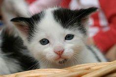 Das kleine Kätzchen ist erst 2 - 3 Wochen alt