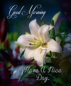 Good Morning Pictures, Images, Photos - Page 2 Sweet Good Morning Images, Latest Good Morning Images, Good Morning Beautiful Pictures, Good Morning Beautiful Flowers, Good Morning Nature, Good Morning Images Flowers, Good Morning Beautiful Quotes, Good Morning Photos, Morning Pictures