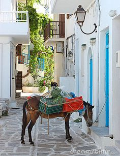 Picture of the streets in the Greek Island of Paros - Cycladic Islands - Greece