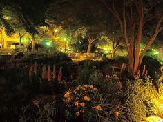 Falls Cottage Garden at Night - Downtown Greenville, South Carolina, USA by olympusjgreen, via Flickr